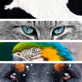 Animaliers